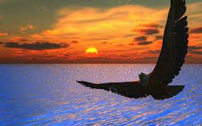 eagle, water, sun